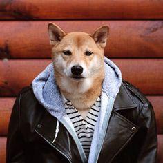 Conheça o Menswear Dog, um cachorro que ganha 15 mil dólares por mês só para…
