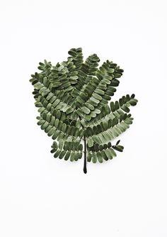 // leaves