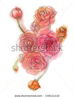 Watercolor ranunculus illustration. - stock photo