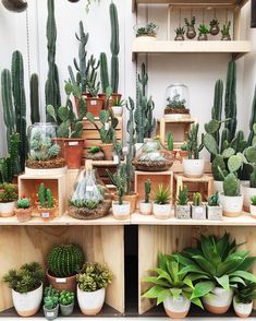 Diy Garden Containers Hanging Baskets 70 New Ideas Succulent Gardening, Cacti And Succulents, Planting Succulents, Cactus Plants, Garden Plants, Indoor Plants, Planting Flowers, Cactus Flower, Decoration Plante