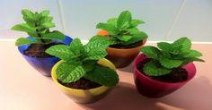 Si Tienes Esta Planta En Tu Hogar, Nunca  Más Volverás A Ver Ratones, Arañas y Otros Insectos Jamas!!! – Super Remedios