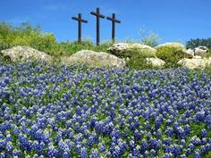 Easter morning in Texas...