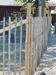 Living by H Farm Fence, Fence Gate, Garden Fencing, Lawn And Garden, Permaculture Farming, Plants For Raised Beds, Country Cottage Garden, Good Neighbor, Urban Homesteading