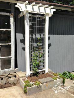 DIY Garden Trellis. outside Maddies doggie door.
