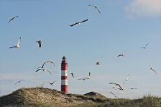 WILLIAMSON-FOTO - Amrum, perhaps Germany's nicest Island
