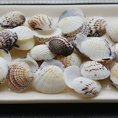 Beach Themed Shells - Set of 4 Packs (40 pieces/Pack)
