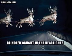 reindeer in the headlights, funny pictures - Dump A Day
