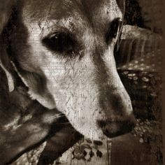 my dog Jesse by Valerie Allen