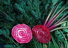 Guide from Cornell website -- beets