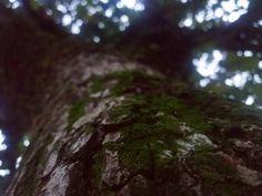 Alguém está sentado na sombra hoje porque alguém plantou uma árvore há muito tempo. #fotografia #tirefotos #fotor #paisagem #natureza #fotododia #arvore #fotografiaevida #photo #paz #photographers #photolovers #photography #fotografía #desfoque #fotografe