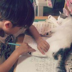 勉強中。甘えん坊すぎる猫🐱溺愛しすぎて邪魔だけどどかせる事が出来ない人間。笑毎日こう、、 pic.twitter.com/7uZwjt5htk