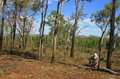 Bush Tucker, cracking open the seeds of the Kalumburu Almond.