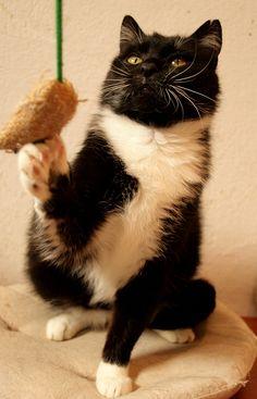 Liczi - kotka do adopcji.
