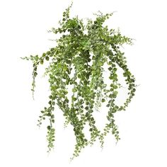 Artificial hanging Maidenhair 24'' Boxing Day, Green Plants, Artificial Plants, Decoration, Houseplants, Decorative Items, Planters, Herbs, Image