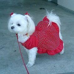 Esse vestidinho vermelho me deixa tão sexy..!!