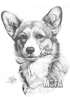 Top quality open edition head study canine art, dog prints from graphite pencil drawing by Mike Sibley. The art of dogs in Limited and Open Editions. Pencil Drawings Of Animals, Animal Sketches, Art Drawings, Realistic Animal Drawings, Draw Animals, Corgi Drawing, Drawn Art, Corgi Pembroke, Dog Paintings