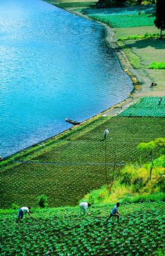 People working in fields along the edge of Lake Batur, Bali, Indonesia