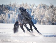 Equine photography by Olga Itina