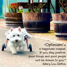 """""""Optimism is happiness magnet. If you stay positive, good things and good people will be drawn to you."""" -Mary Lou Retton"""