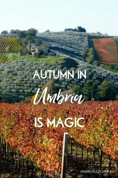 Come to Italy with us! This handcrafted culinary adventure is for anyone who would like to learn more about the wine, gastronomy and culture of Umbria and experience the magic of Italy in Autumn. Join Letizia Mattiacci + Heather Carlson for a 4 night/5 day small group experience in Umbria. Let us take care of you and introduce you to our favorite people, places + delicious things to eat. // A Merry Feast Italian Food + Travel