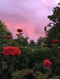 Plant Aesthetic, Flower Aesthetic, Red Aesthetic, Aesthetic Pictures, Pretty Sky, Pretty Flowers, Pretty Pictures, Cute Wallpapers, Mother Nature