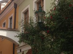 Old lantern and roses in Kutna Hora