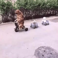 When the homies need a ride to the park http://ift.tt/2cQmsdm