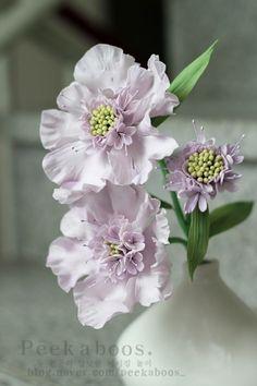 스카비오사 슈가플라워. scabiosa sugar flowers
