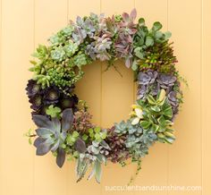 Handmade Mother's Day Gift Ideas (PHOTOS) succulent wreath, living and gorgeous!