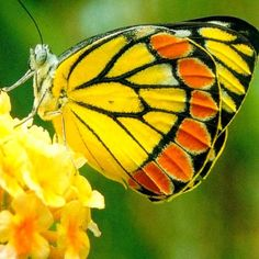 This is the most amazing color - look the flower it has the yellow and orange too!