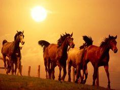 fondos de escritorio - Caballos: http://wallpapic.es/animales/caballos/wallpaper-31745