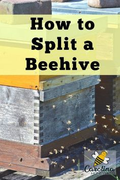 Knowing how to split a beehive properly is an important beekeeping skill. Is your hive a ready to split? When is the best time of year to do hive splits? Bee Hive Plans, How To Split, Beekeeping Equipment, Beekeeping Supplies, Beekeeping For Beginners, Worker Bee, Raising Bees, Bee Farm, Backyard Beekeeping