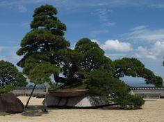 Rose Garden: lifesize bonsai | Flickr - Photo Sharing!