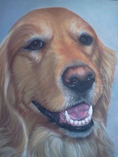 Adrienne .... such a sweet dog! This is a pastel piece that my mom did for my in-laws. Check her stuff out at cclaireportraits.com!