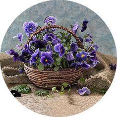 Purple pansies in a basket Art Floral, Daffodils, Pansies, Purple Flowers, Beautiful Flowers, Happy Flowers, Exotic Flowers, Yellow Roses, Pink Roses