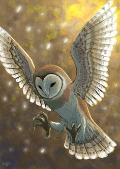 Barn owl by ~Faezza on deviantART