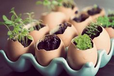 In this article, Survival Life shares how to use eggshells and egg cartons to start your seed planting. Read here to learn more about egg carton seedlings! Cheap Greenhouse, Backyard Greenhouse, Mini Greenhouse, Greenhouse Ideas, Portable Greenhouse, Sprouting Seeds, Planting Seeds, Egg Carton Crafts, Starting Seeds Indoors