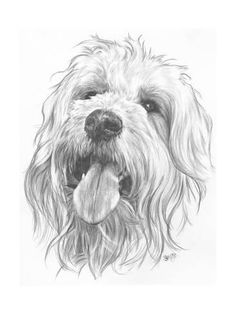 Barbara Keith 'Goldendoodle' Canvas Art in. W x 47 in. H), White Pencil Art Drawings, Drawing Sketches, Sketching, Graphite Drawings, Animal Sketches, Animal Drawings, Pet Drawings, Canvas Art Prints, Framed Canvas