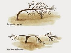 Такое дерево, которое будет радовать всех своей красотой, к которому будет удобно подойти с любой стороны, на котором будут крупные и здоровые плоды, которые удобно будет собирать, и которое не будет, при этом, занимать много места! Мечта - подумали Вы, но это реально и зависит только от вас!