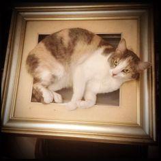 Medea Gatta, 50x40, Gatto su tela, estate 2013 #gatti #gattini #tela