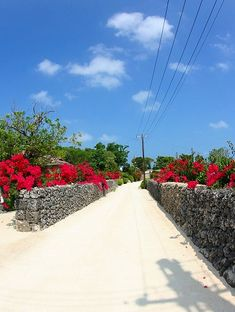 hibiscus-road in taketomi-isl. Luck Symbol, Kyoto, Have A Nice Trip, Naha, Japan Photo, New York, Okinawa Japan, Beautiful Places To Visit, Great View