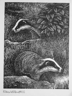 Robert Smith. Badgers. (wood engraving). A great subject for a Pyrography / wood burning piece. I've always loved Badgers ;)