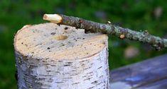 rautakaupoissa Spruce Tree, Branches, Feta, Christmas Wreaths, Pine, Decor, Noel, Christmas