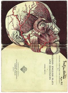 Anatomical – Mark Powell