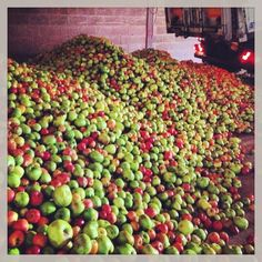 A delivery of apples arrives at Thistly Cross