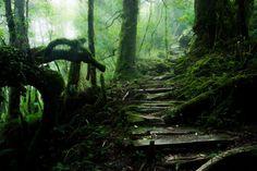 Прогулочные тропы с атмосферой магии