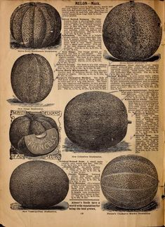 Alneer Brothers seed and plant catalogue for 1898 : Alneer Brothers : Free Download, Borrow, and Streaming : Internet Archive Plant Catalogs, Content Page, Food Illustrations, The Borrowers, Archive, Internet, Cover, Free