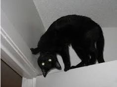 The exorcism of Kitty Purry http://ift.tt/2eBeMh3