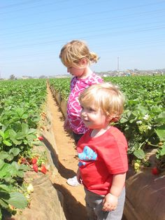 Strawberry Picking Carlsbad