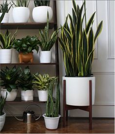 Love that snake plant in the stand. I believe magnolia has that stand at target.